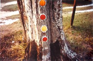 William Eggleston, Untitled (Reflectors), c. 1970's